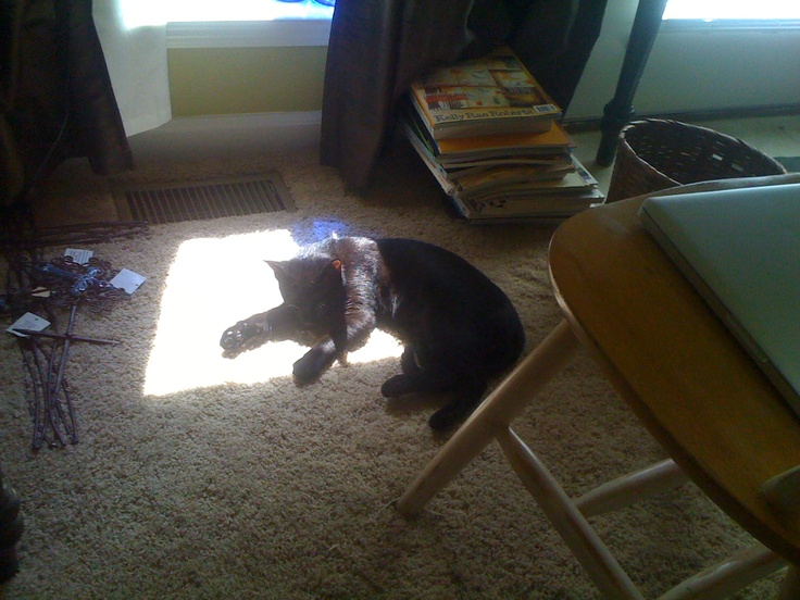 i want to be a cat. gracie loves the sunshine.