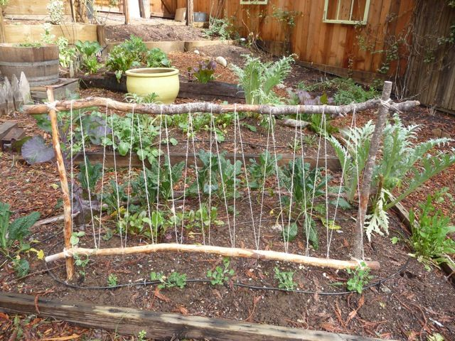 Even in the garden you don't need to spend money.................Spring is coming, start planning your backyard garden -- perhaps make a cute pea trellis like this one.