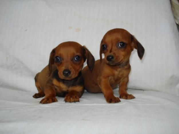 #DOGS: Baby Weiners! http://www.dunway.com/dog_recipes/index.html                                                                                                                                                      More