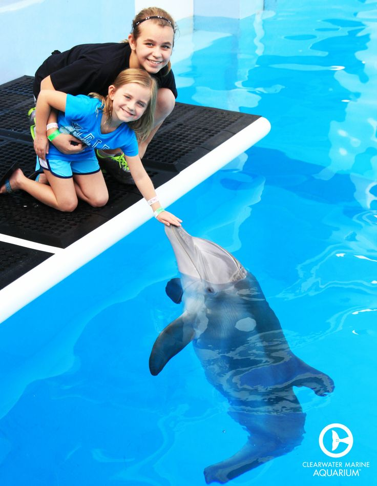 14 best Interactive Adventures at CMA images on Pinterest - marine mammal trainer sample resume
