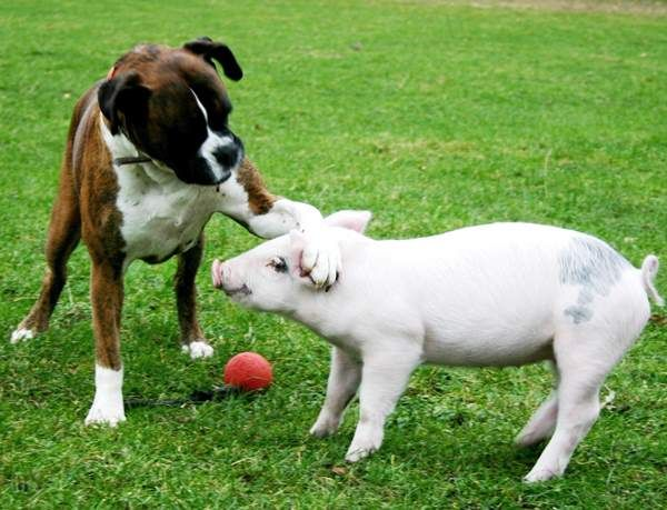 30 Of The Cutest Interspecies Animal Friendship Ever