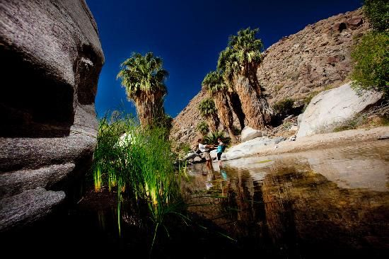 Palm Springs Tourism: 137 Things to Do in Palm Springs, CA ...