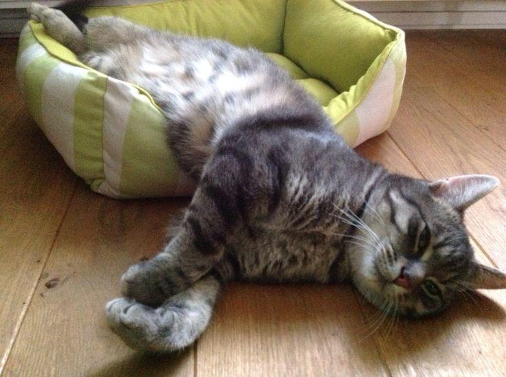 Ollie in een te klein mandje, mijn gekke kat