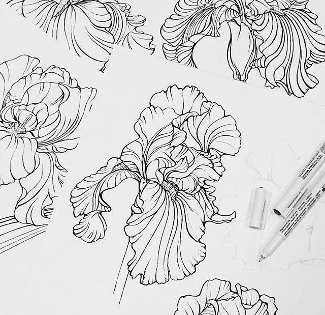 Botanical Flower Line Drawing : Best floral drawing ideas on pinterest doodle