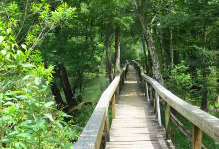 Welcome to Gilchrist Blue Springs State Park in High Springs, Florida's newest state park. (High Springs is about 20 miles from Gainesville.)