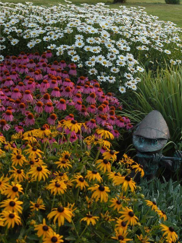 Delightful Daisies for the Perennial Garden