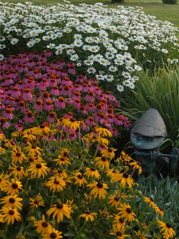 Delightful Daisies for the Perennial Garden