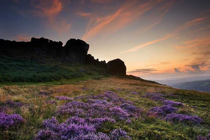 Heather on the Moors in Haworth, Yorkshire