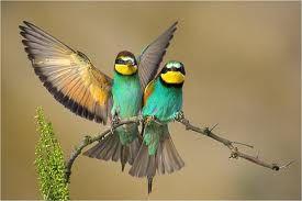 """Alle vogels vliegen - www.activitheek.nl.nl Ga met de kinderen in de kring staan. Jij noemt steeds zinnen met allerlei voorwerpen en zegt: """"Alle ... vliegen."""" Als het genoemde inderdaad kan vliegen, dan moeten de kinderen met de armen een vliegende beweging maken. Kan het voorwerp niet vliegen, dan moeten zij hun handen in de zij houden. Wie niet goed reageert is af en moet gaan zitten."""