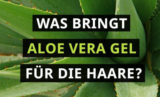 Aloe Vera Für Die Haare