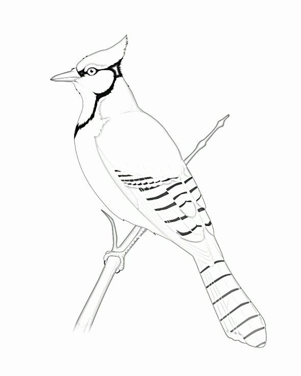 24 Blue Jay Coloring Page in 2020 | Bird coloring pages ...