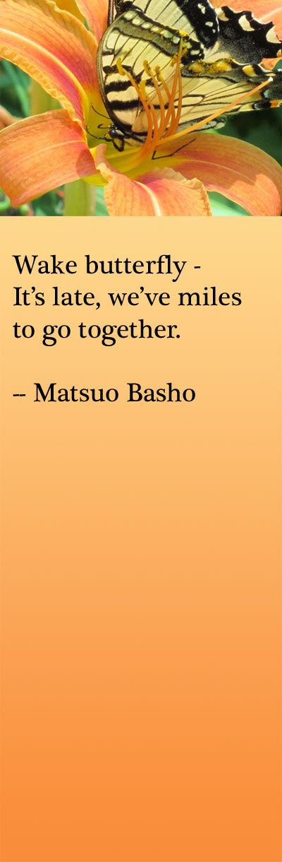 Wake Butterfly -  It's late, we've miles  to go together.  -- Matsuo Basho