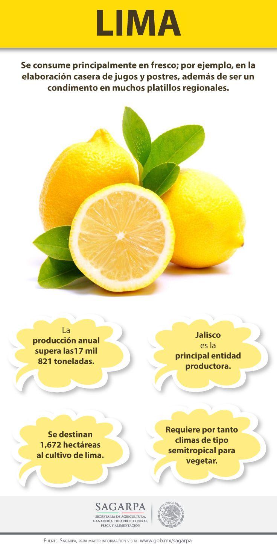 La lima se consume principalmente en fresco; por ejemplo, en la elaboración casera de jugos y postres, además de ser un condimento en muchos platillos regionales. SAGARPA SAGARPAMX #SomosProductores