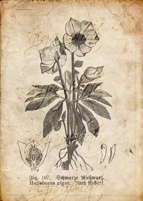 Vintage Botanical floral plants Old paper by MemoriesPictures