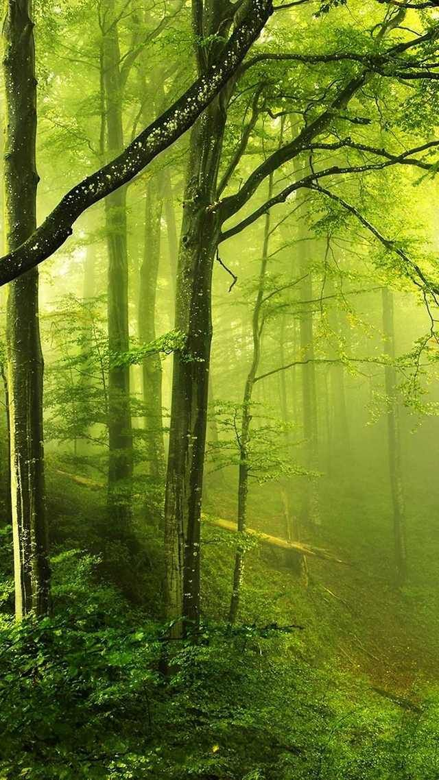 10 Wallpapers With Awesome Trees For The Iphone 6 Imgur Forest Wallpaper Forest Photos Nature Iphone wallpaper green forest