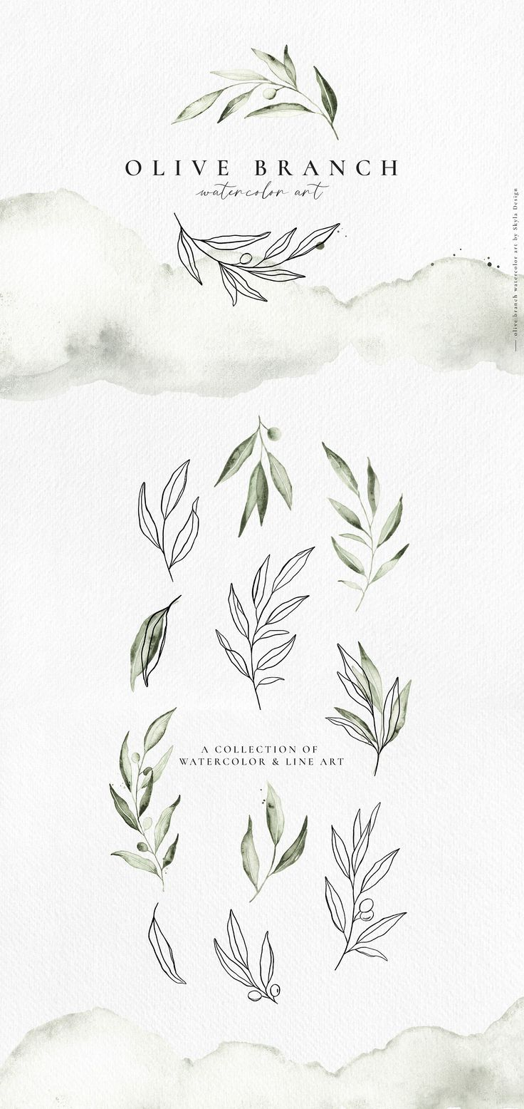 Olive branch watercolor & line art – Liv Roake