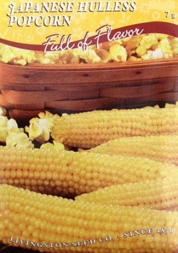 Japanese Hulless Popcorn Seeds - 7 grams