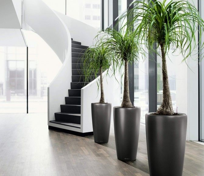 Contemporary & stylish....try an artificial version!