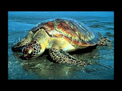 1000+ images about OCEAN VIDEOS on Pinterest | Octopus, Fun songs ...