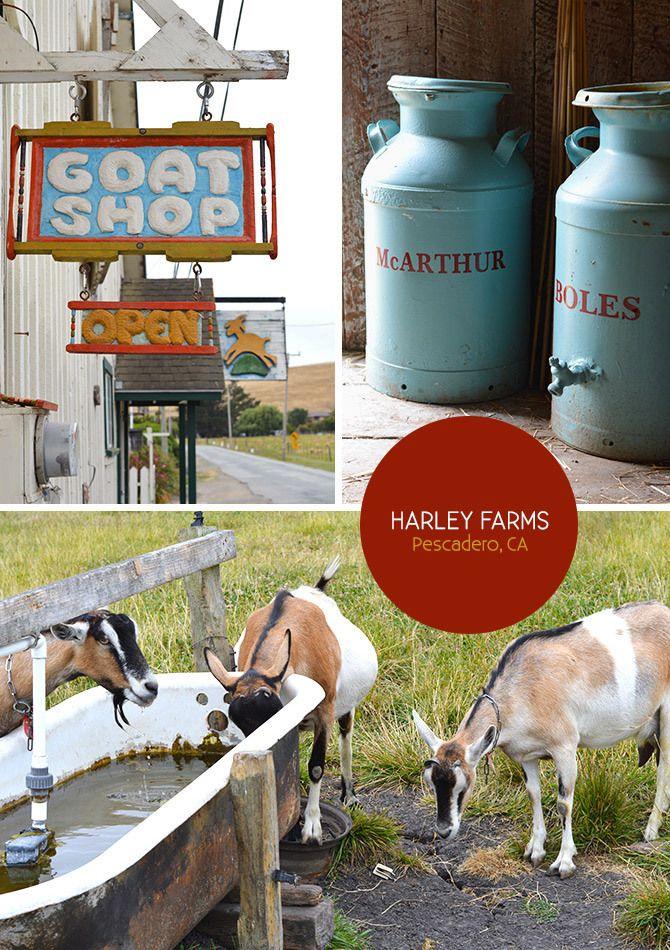 Harley Farms in Pescadero, California via the Spotted SF blog.