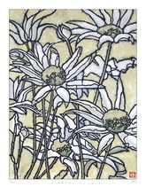 flannel flower: 615mm x 810mm (printed image size 530mm x 700mm)