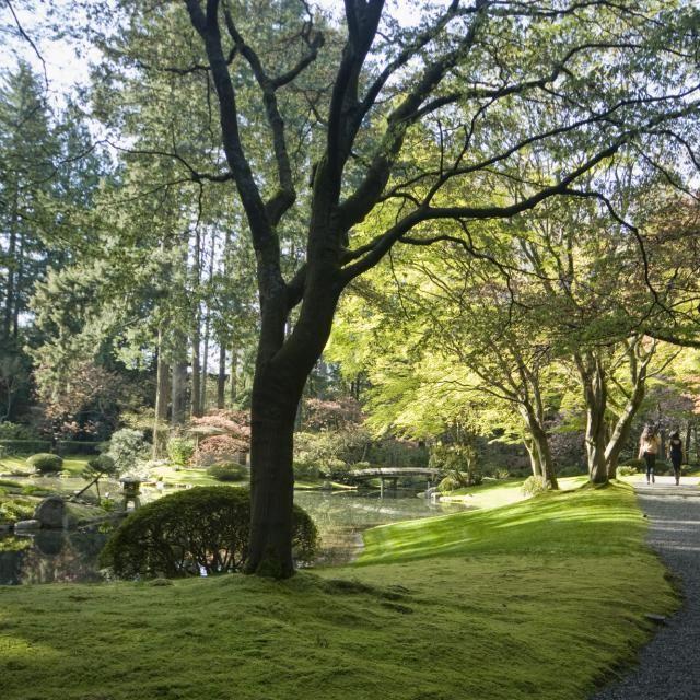 UBC Nitobe Memorial Gardens #exploreBC #exploreBCgardens #Gardens #Vancouver #JapaneseGarden