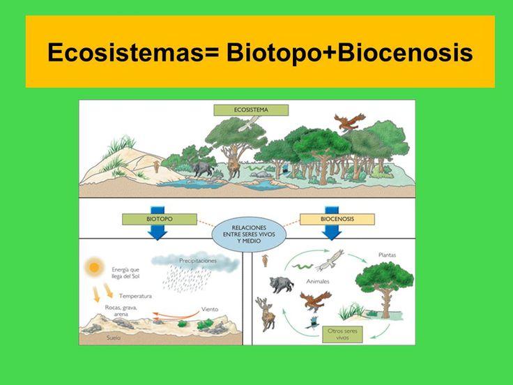 También se puede definir ecosistema como el conjunto formado por un biótopo (el medio) y una biocenosis (los organismos) y las relaciones que se establecen entre ellos.