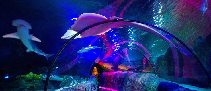 Sea Life Loch Lomond Aquarium is just 20 minutes from Glasgow, situated on the stunning Loch Lomond Shores. The aquarium offers great fun for all the family, whatever the weather!