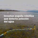 Inventan anguila robótica que detecta polución del agua