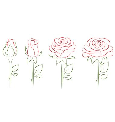Blooming roses vector on VectorStock&reg