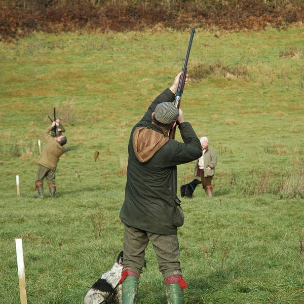 10 Best Rectory Farm Pheasant And Game Shoot Images On