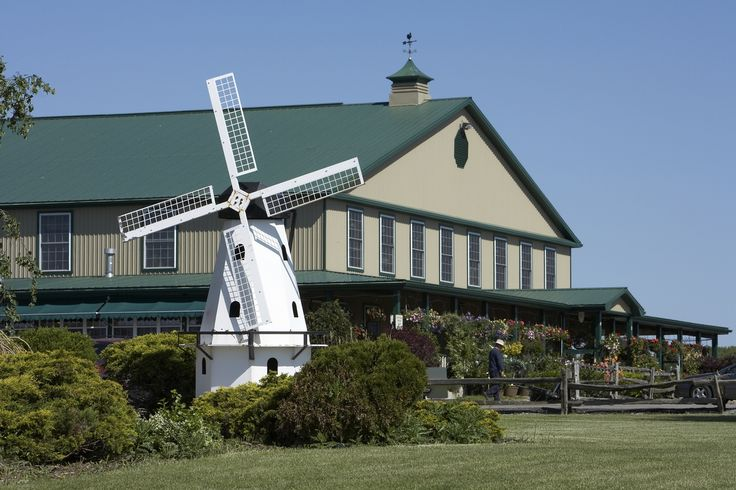 Dutch mill country market  ? for Tea... gotta try it out  $22 pp