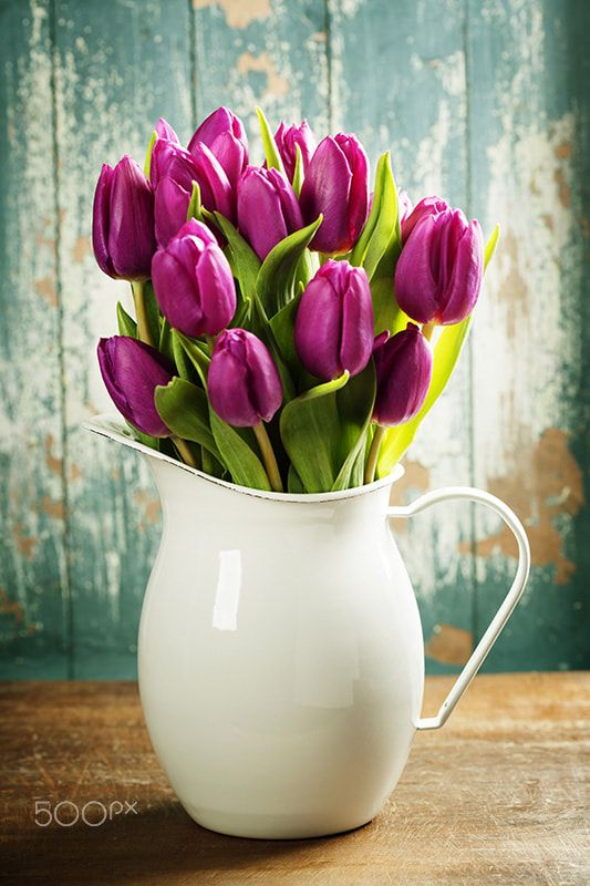 Spring tulips - Purple Tulips on a wooden surface. Studio photography