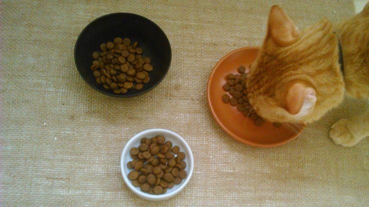 O MISTÉRIO Não importa quanta ração você coloca no pratinho, o gato sempre come o meio e deixa um restinho nas beiradas. E depois fica miando para você repor a comida como se o prato estivesse vazi…