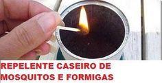 Como fazer um repelente de mosquitos e formigas com borra de café (ecológico e eficaz!) | Cura pela Natureza