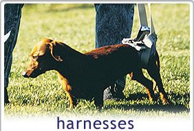 41 Best Walkabout Harnesses Images On Pinterest