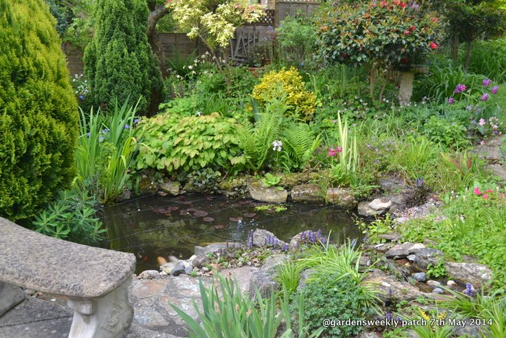 Wildlife pond; Make a pond melt into the surrounding area with considered planting, so that it reveals itself as a pleasant natural surprise