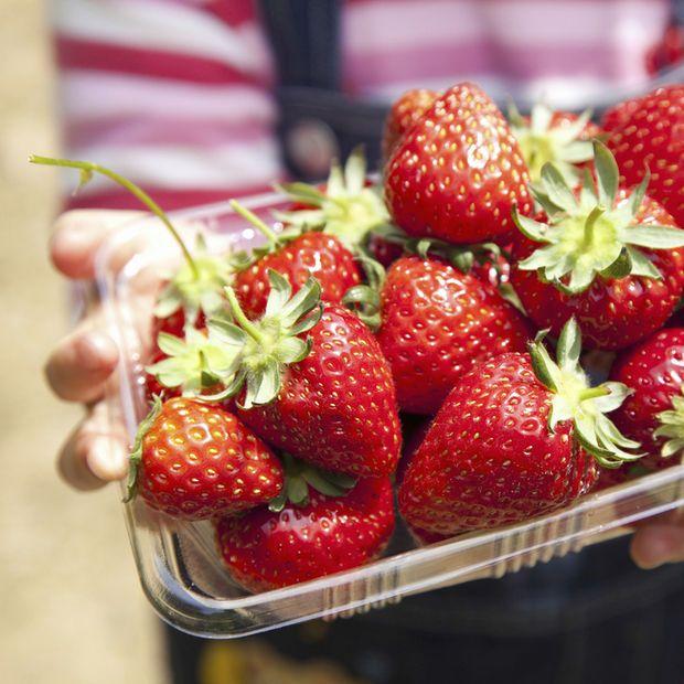 Erdbeeren haben endlich wieder Hochsaison! Die süßen Früchtchen schmecken am besten, wenn wir sie selbst pflücken.