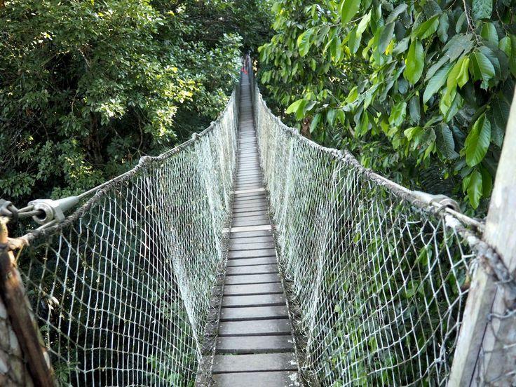 peru - what to do in Peru - flash anthology - amazon jungle - rainforest - rope bridge