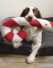 2e330b0a4be1 Squeaky holiday fun for your dog, this is the toughest plush candy cane toy  around.
