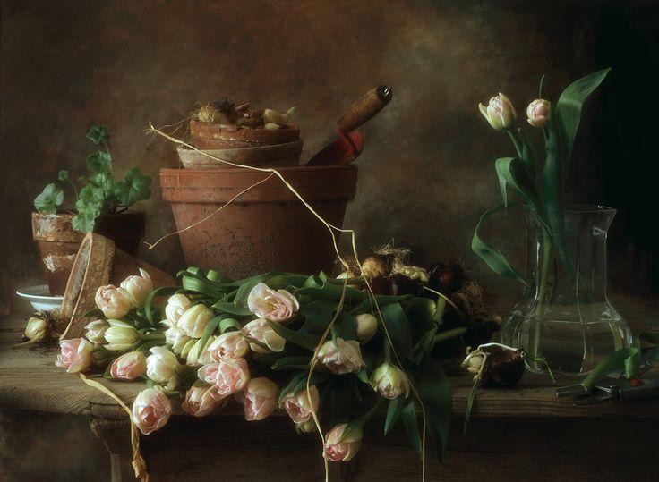 Francois Gillet Photographer