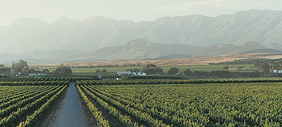 Wine Regions of South Africa