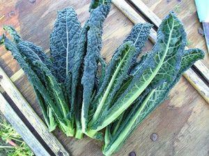 Kale 101: How to Buy, Store, & Enjoy Kale
