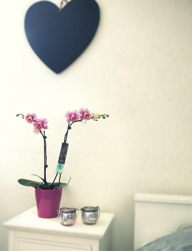 Alice Adventures #phalaenopsis #orchid