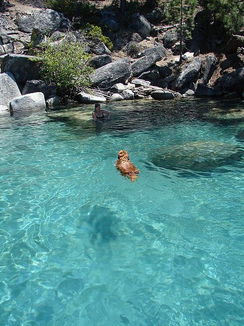 Oh, what a photo. Love those Lake Tahoe dogs! www.TahoeActivities.com