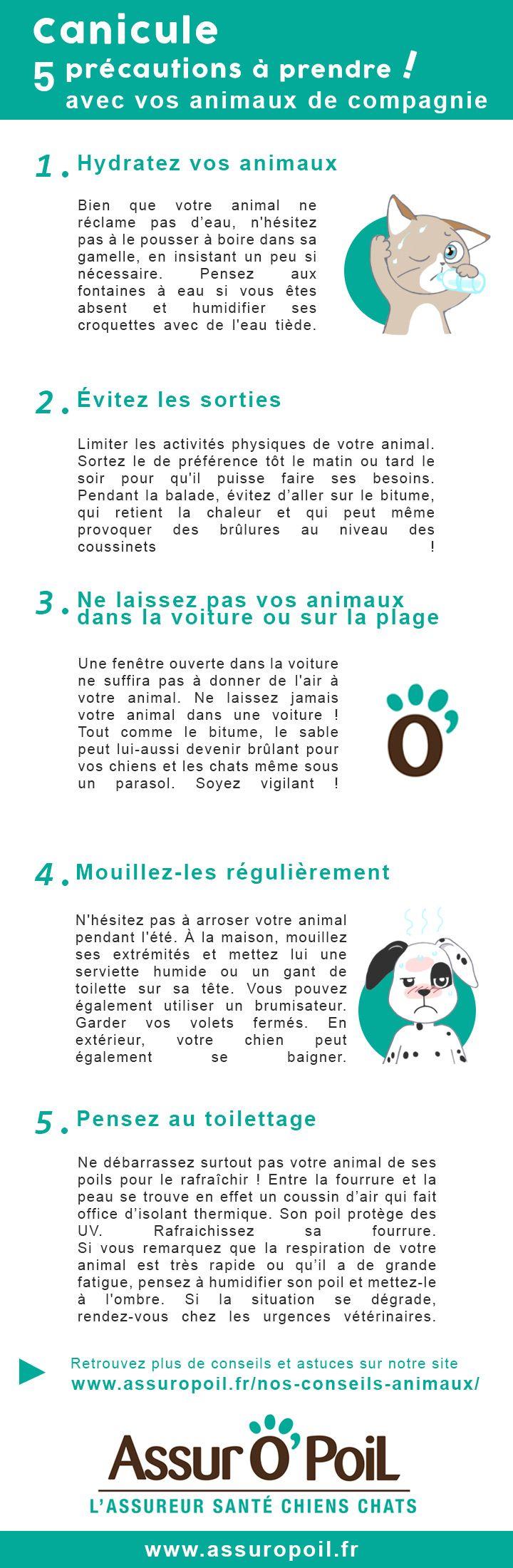 Canicule : 5 précautions à prendre avec votre #animal de compagnie #chien #chat