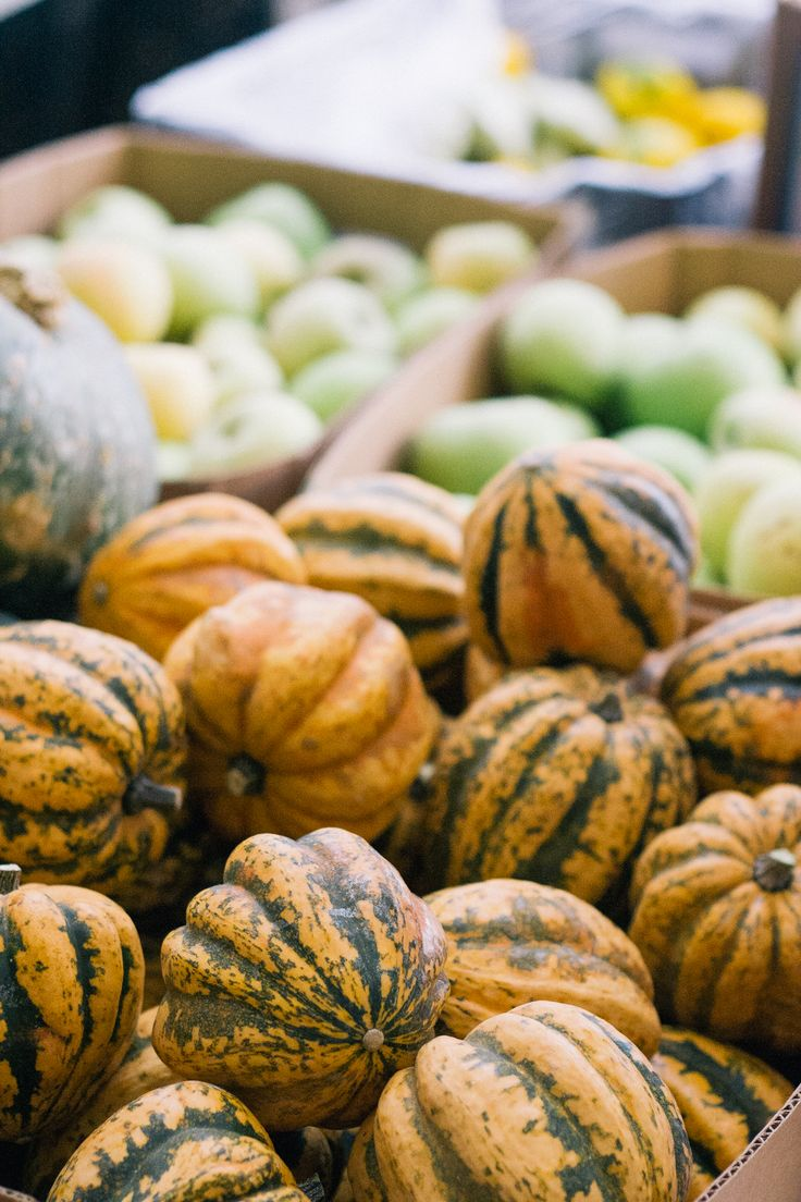 Sacramento Farmers Market Guide: October https://www.cityscoutmag.com/life-and-health/more-life-and-health/sacramento-farmers-market-guide