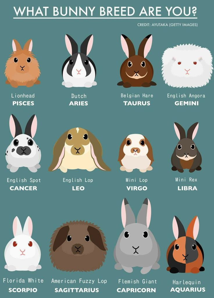 What bunny are you? (With images) Zodiac signs animals