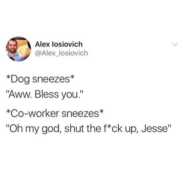 Dog Sneezes Aww Bless You Co Worker Sneezes Oh My God Shut The F Ck Up Jesse Dog Sneezing Funny Messages Funny Mind Tricks