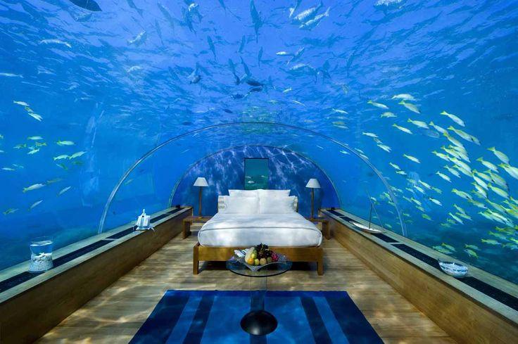 #Мальдивы. #Курорт #Рангали. Здесь находится #уникальный #отель, известный своим #подводным #рестораном, расположенным на глубине пяти метров. Стены ресторана выполнены из #сверхпрочного #акрила, благодаря чему посетители с комфортом могут любоваться подводным миром и его обитателями. С недавнего времени #Maldives #Rangali #Island предоставляет #уникальную возможность для молодоженов, которые могут провести первую брачную ночь в подводном мире.